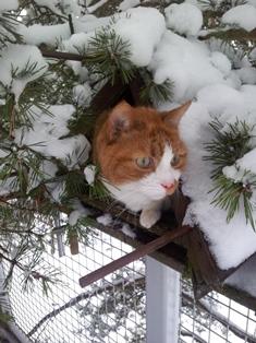 Kleintiere Katze